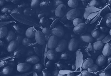 Tradizione Olearia